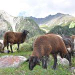 genusshotel-alpine-momente